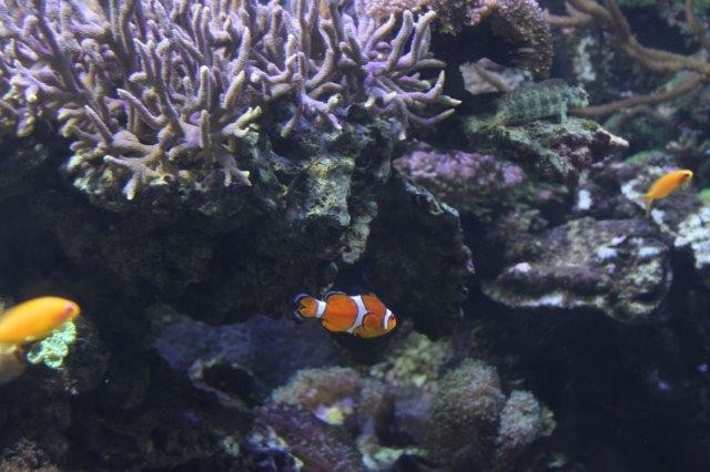 Nemo in Valencia