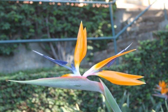 Papagei Blume