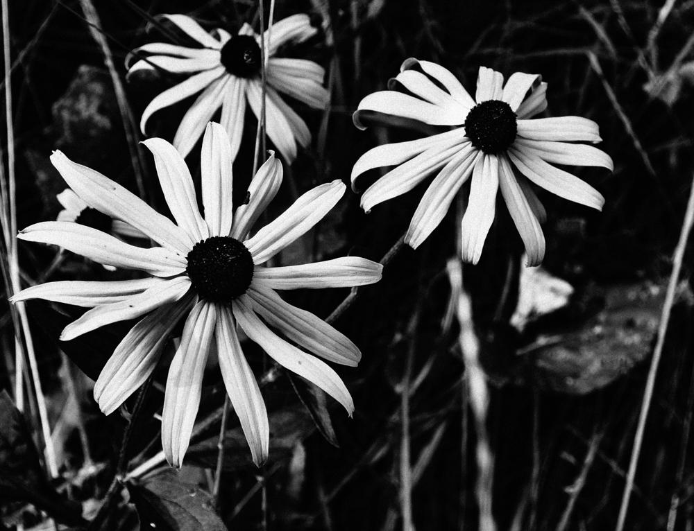 Floweres_10