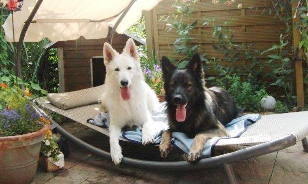 Wolf und El Patron Assistenten der Geschäftsführung