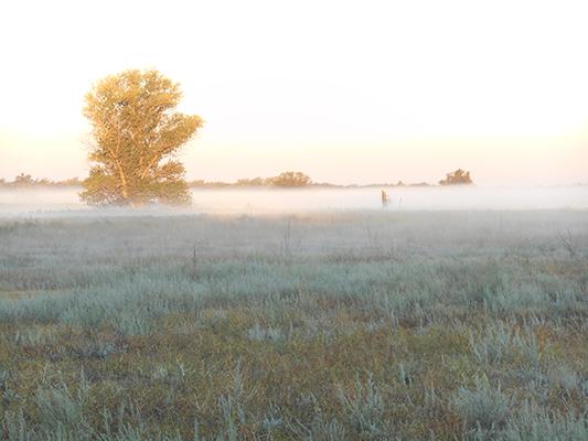 Туман на фоне восхода.