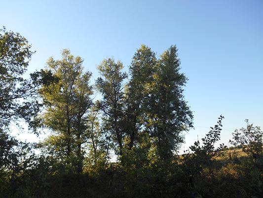 Антенна Евгения уходит к самой верхушке дерева.