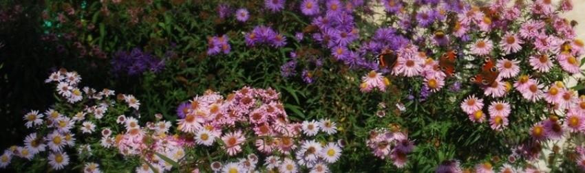 fleurs d'automne des massifs