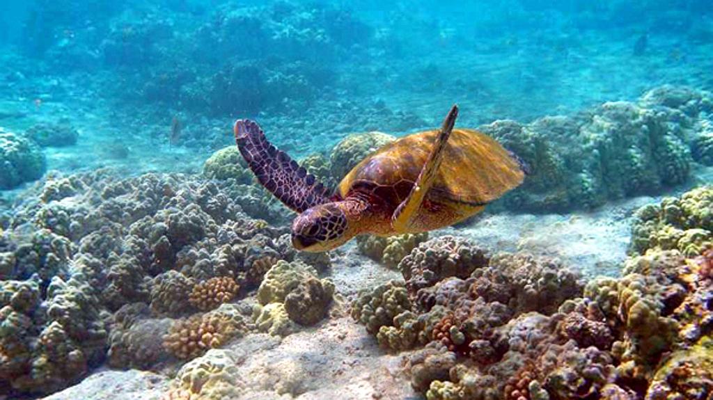 Kenya Vacanze - Tartaruga marina