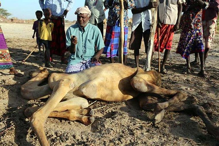 Carestia in Africa: è la fame