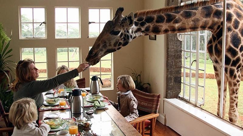 Kenya. Colazione al Giraffe Manor di Nairobi