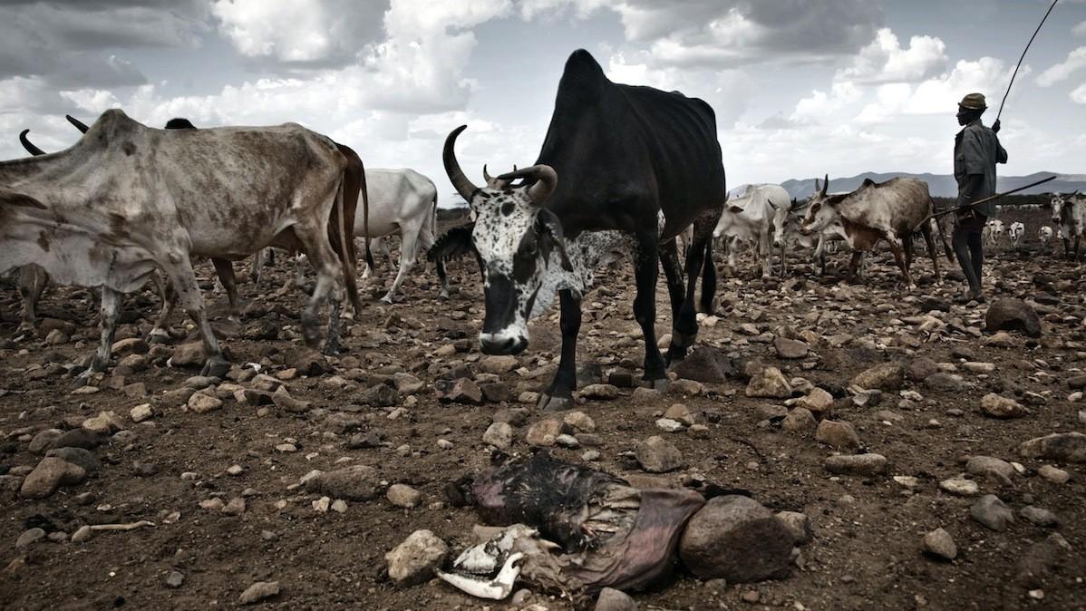 Siccità in Kenya. Foto Stefano De Luigi