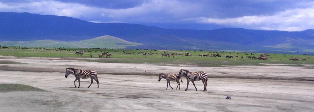 Riserva Ngorongoro