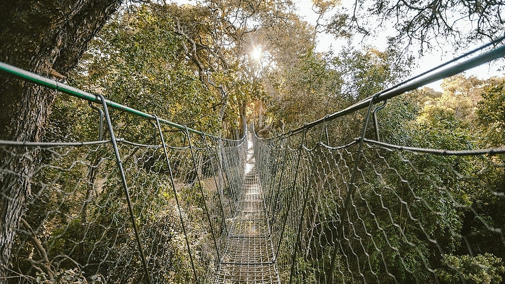 Ngare Ndare Forest Canopy Bridge North Laikipia Kenya