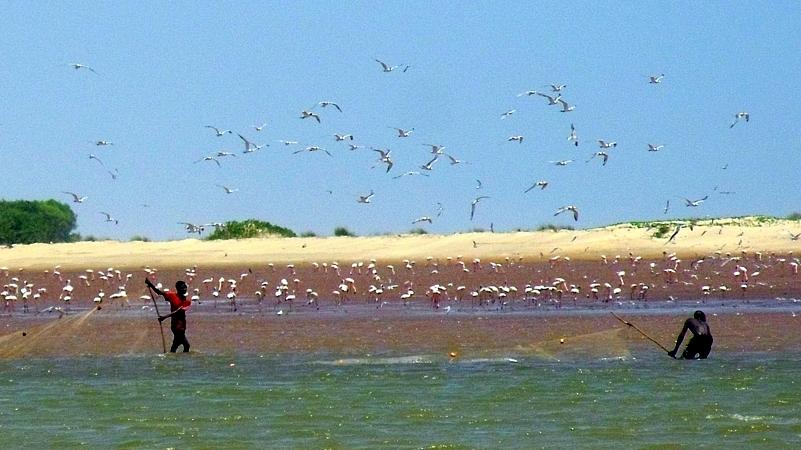 Foce Sabaki River