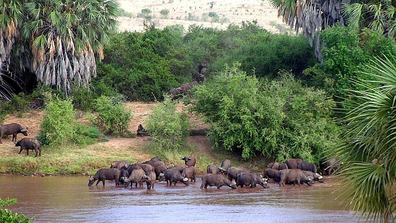 Kenya. Tana River
