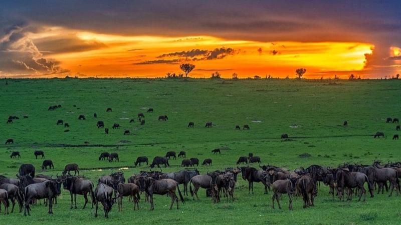 Kenya. Masai Mara Reserve