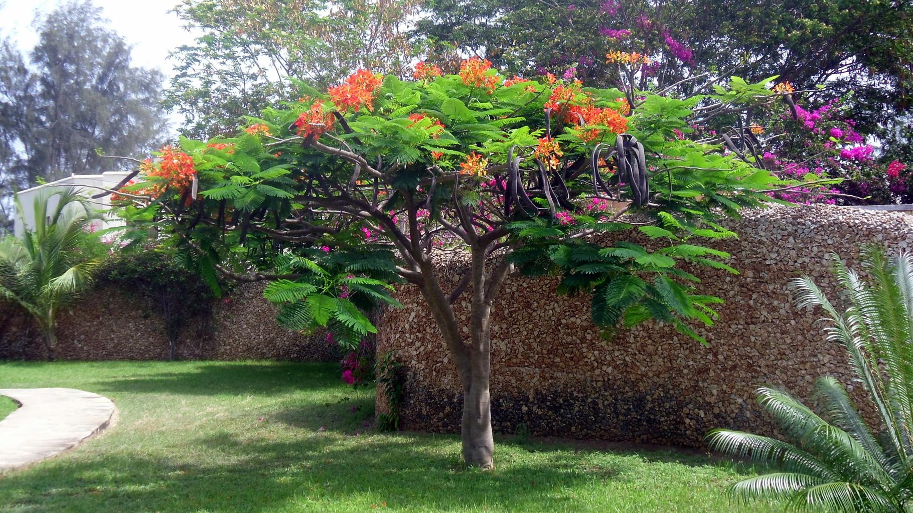 Piante e fiori nella tembo court kenya vacanze for Giardino fiori
