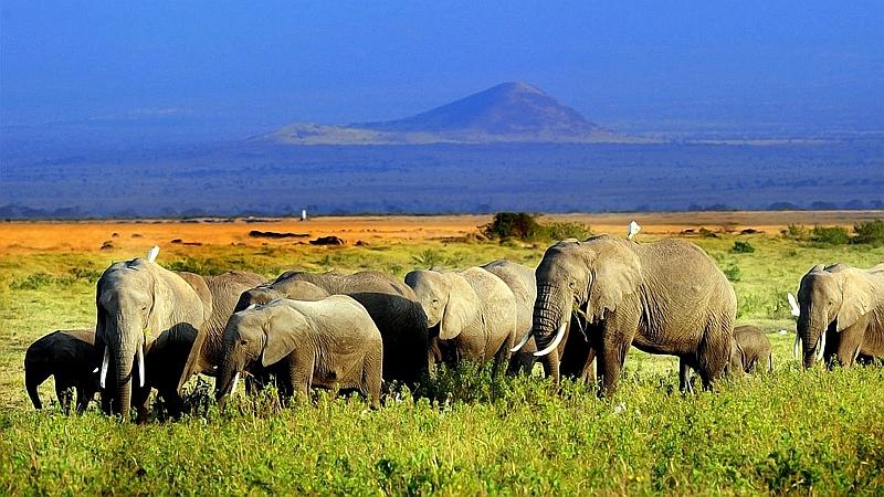 Kenya. Elefanti nel Parco Amboseli