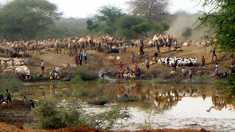 Kenya. Pastori e il loro bestiame ad un abbeveratoio per uomini e animali