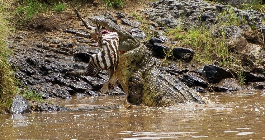 Kenya. Masai Mara Safari
