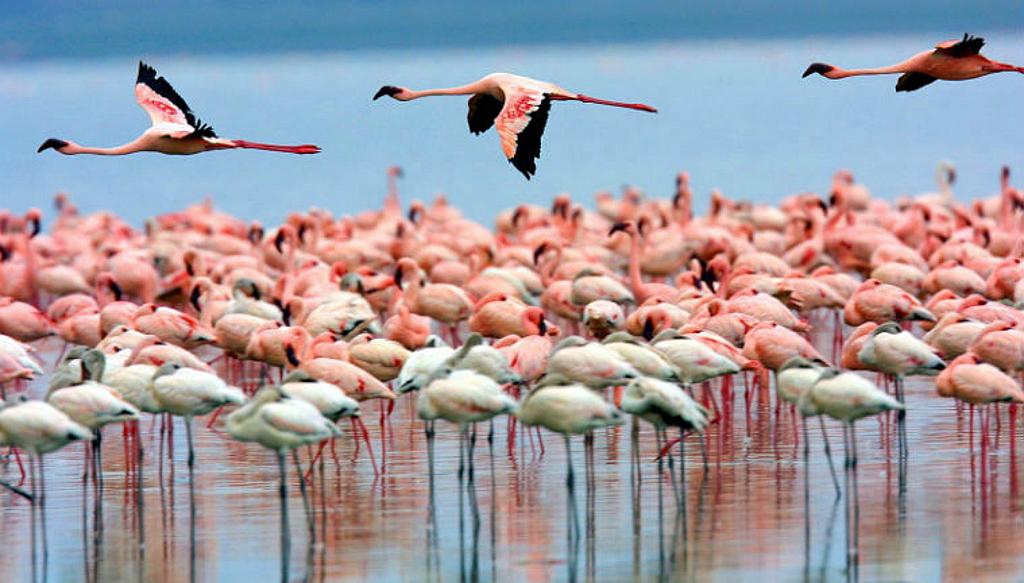 Kenya Vacanze - Fenicotteri