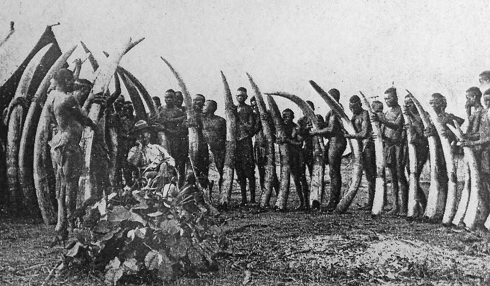 Frederick Banks con le zanne degli elefanti uccisi nell'enclave di Lado, 1905