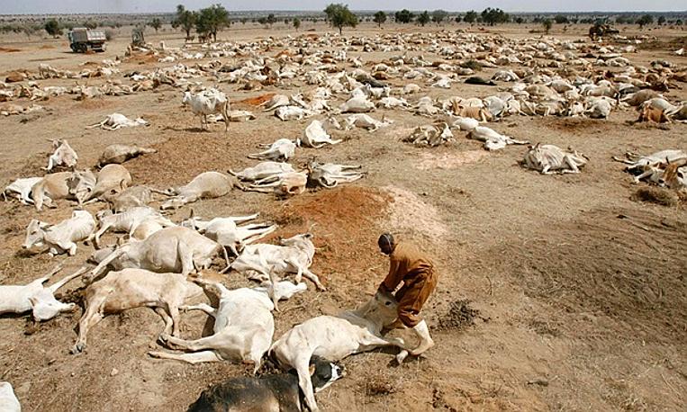 La siccità uccide almeno 19.300 capi di bestiame nello Zimbabwe