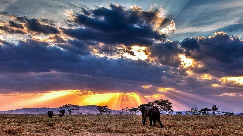 Kenya. Tramonto nella savana