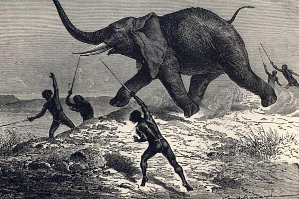 Caccia all'elefante.
