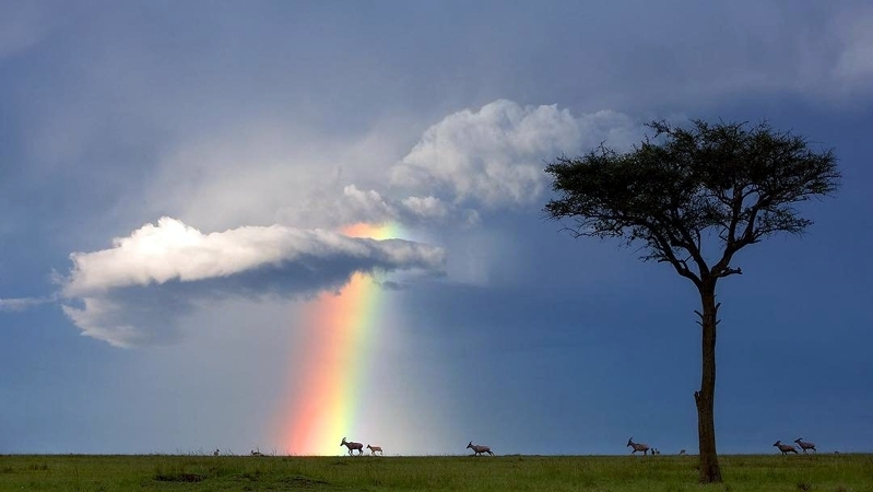 Kenya. Un momento fortunato nel Masai Mara