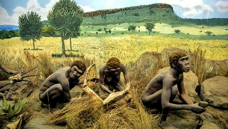 Kenya. Homo Erectus. Museo Nazionale Nairobi