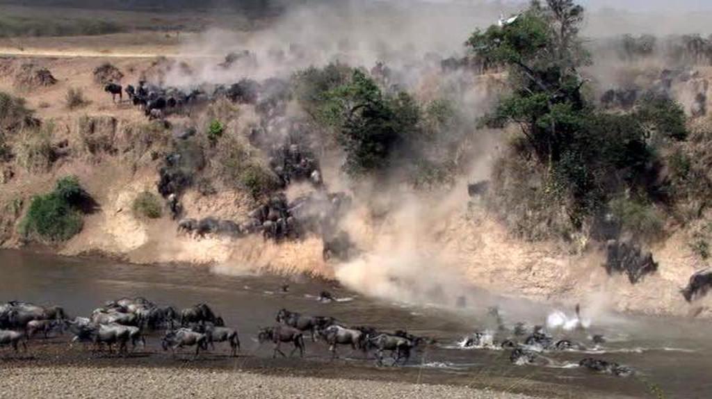 Kenya Vacanze - Migrazione gnu, fiume Mara