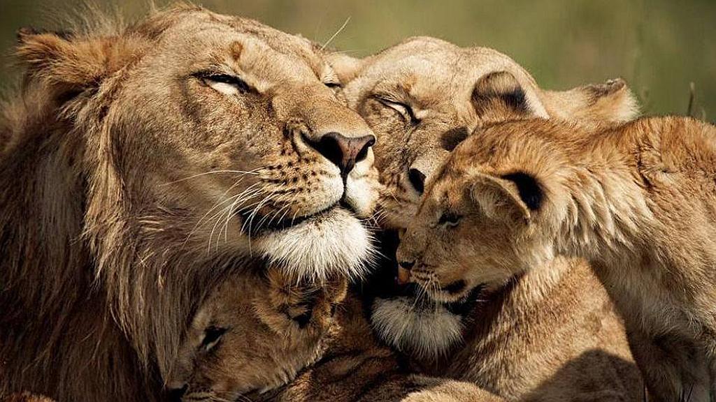Kenya Vacanze - Unione familiare