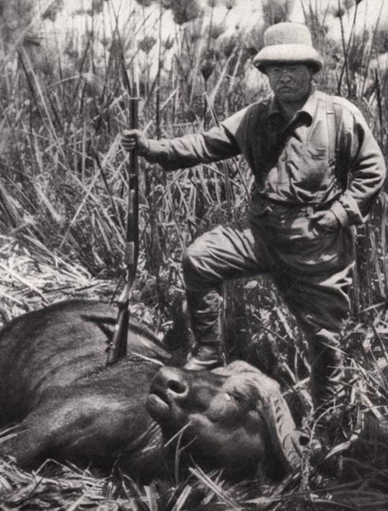 Teddy Roosevelt posa con un bufalo ucciso