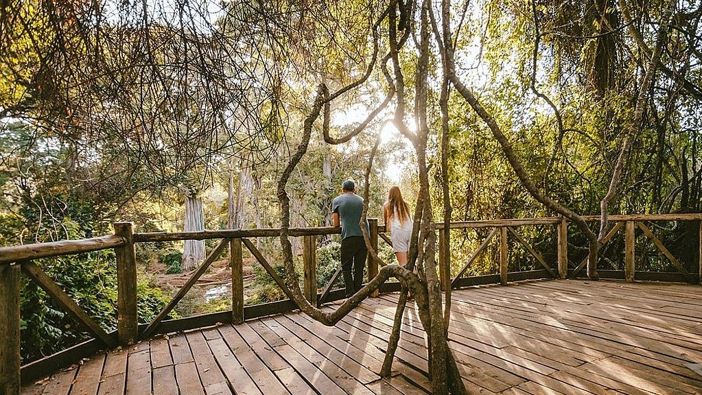 Ngare Ndare platform canopy bridge