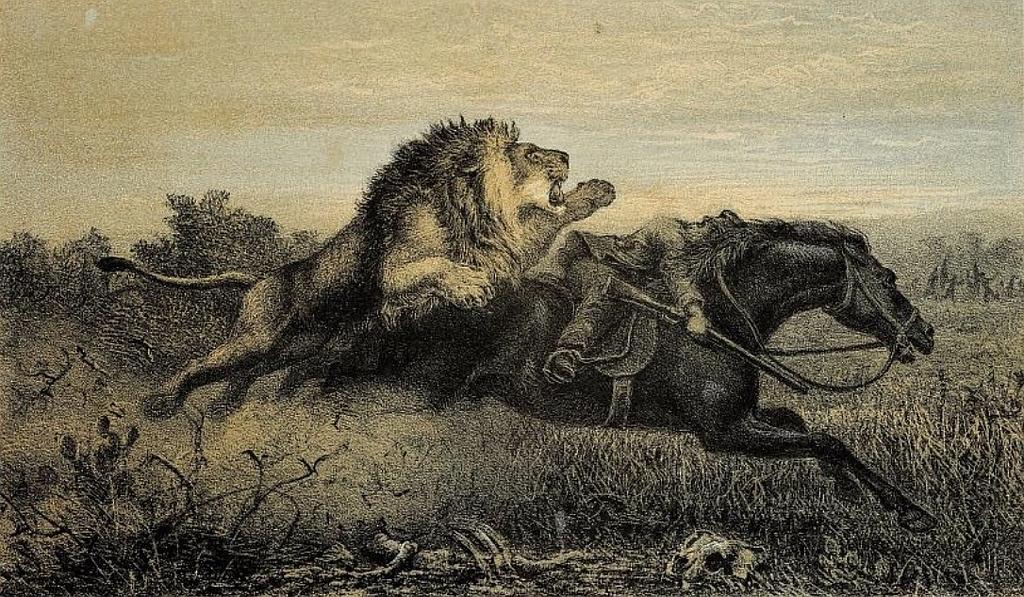 William Charles Baldwin attaccato da un leone