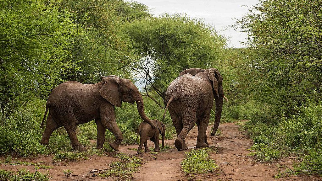 Elefanti nella Kerio Valley-Tugen Hills