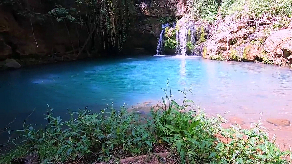 Ngare Ndare Forest Reserve