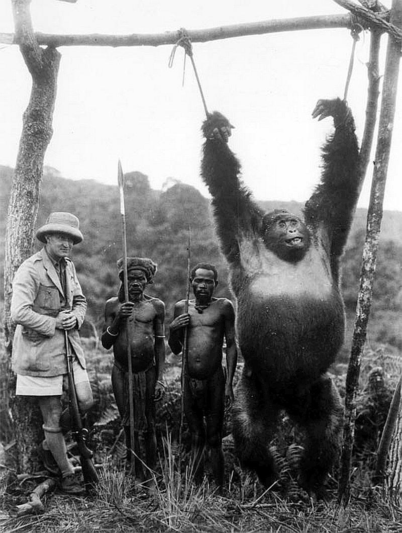 Il capitano inglese A. Gatti con due pigmei e un gorilla di circa 230 chili di peso, ucciso nella foresta Tchibinda nella regione del Lago Kivu, Congo Belga 1930
