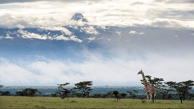 Giraffa reticolata e Monte Kenya. Ol Pejeta Conservancy