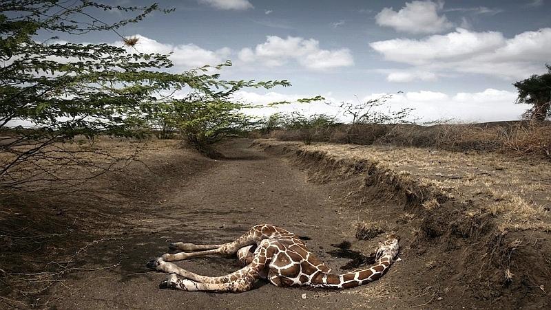 Kenya. Siccità in Kenya