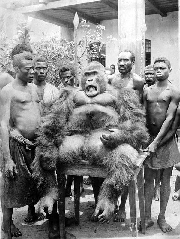 Alcuni indigeni attorno ad un Gorilla, nel 1925