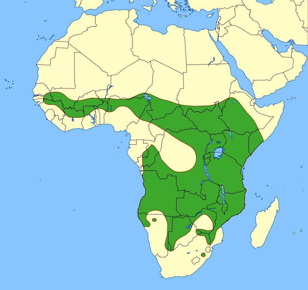 Areale del Leone dell'Africa orientale