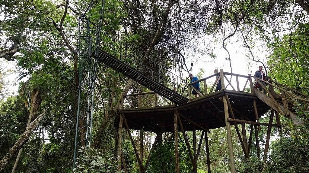 Ngare Ndare tree platform