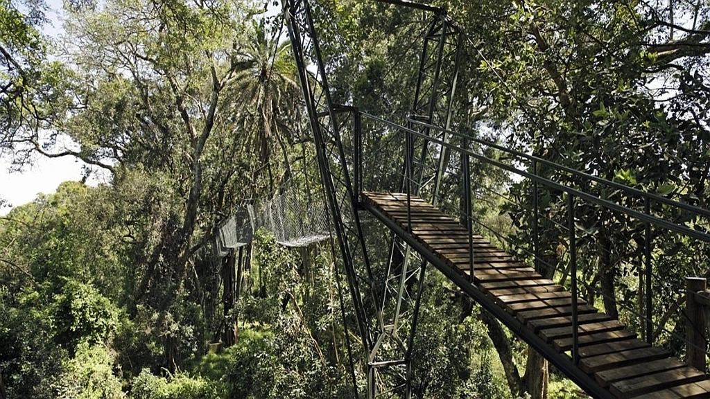 Ngare Ndare Forest bridge