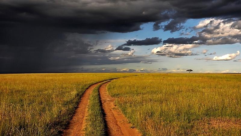 Kenya. Savana africana