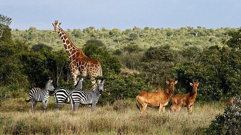 Kenya. Laikipia Plateau