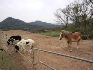 会場の空山ポニー牧場のポニーたち