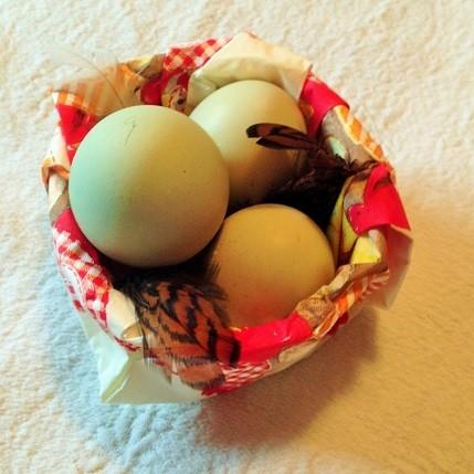 Zartgrüne Eier vom Araucana Huhn