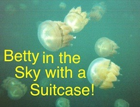 Here are the unbelievable jellyfish in Palau