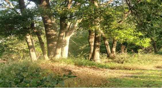 公園内に群生して景観をなしているどんぐり、コナラ、ミズナラなど '16,10,30