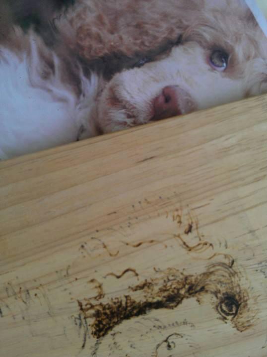 Welpen haben ihre ganz eigene Physiognomie. Was es nicht einfacher macht. Wo ist der Hund hinter der noch viel zu großen Haut? ;-)