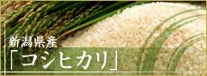 新潟県産「コシヒカリ」