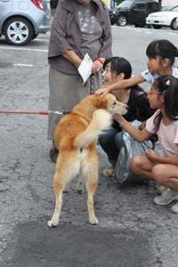 被災犬はっちゃん大人気!